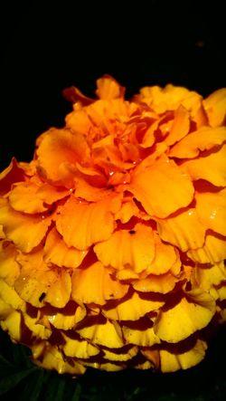 Yellow Freshness Close-up Nature