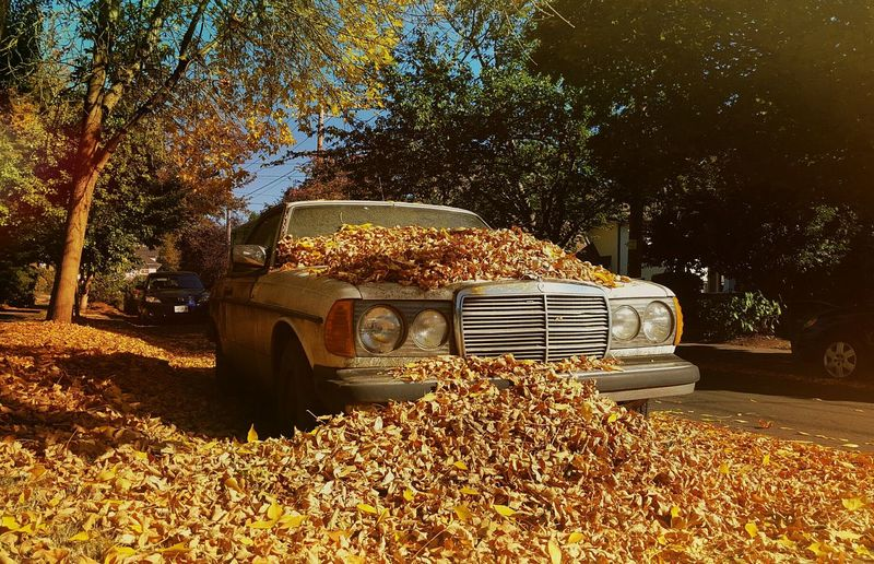 It's Fall Falling Leaves Urban Photography Old Car My Neighborhood Check This Out Eye4photography