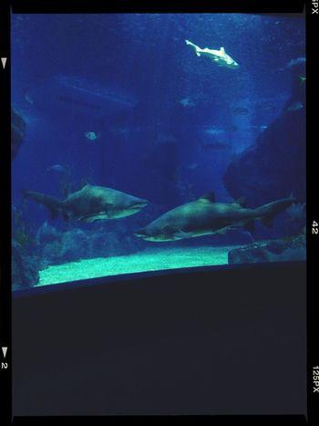 Siam Ocean World Ocean