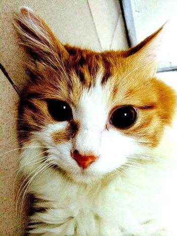 Cat Cute Pets Animals Cute My cute