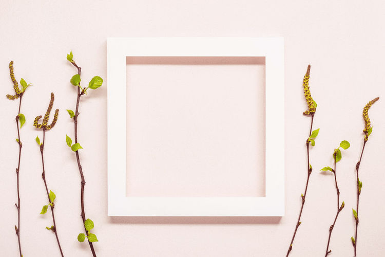 Directly above shot of white flowering plant on table