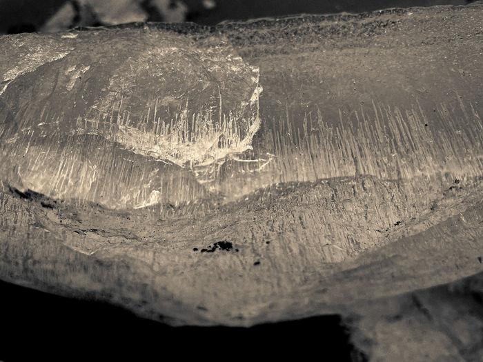 High angle view of wood on rock