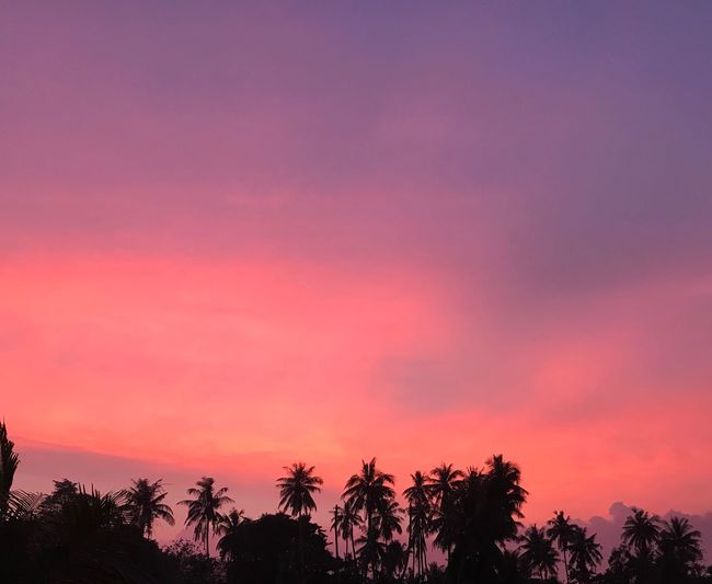 blackpink Tree Sky Sunset Plant Silhouette Beauty In Nature Tranquility Tranquil Scene Pink Color No People