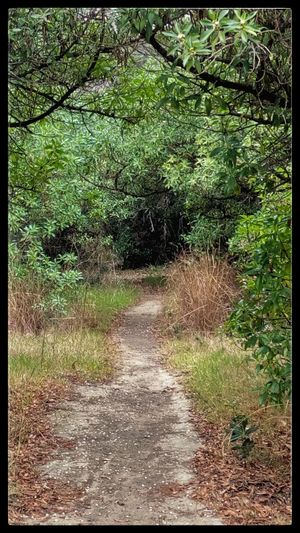 Forest Forest Path Forest Trails Growth Nature Nature Photography No People No People, Outdoors Roads In The Forest Tranquility Wild Plants