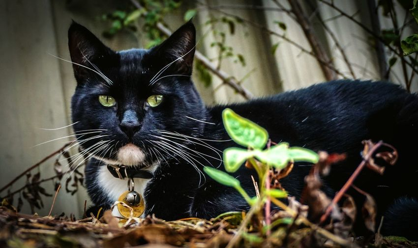 My cat, Zorro. Sony A6000 Cat Pets Pet Photography  Cats A6000