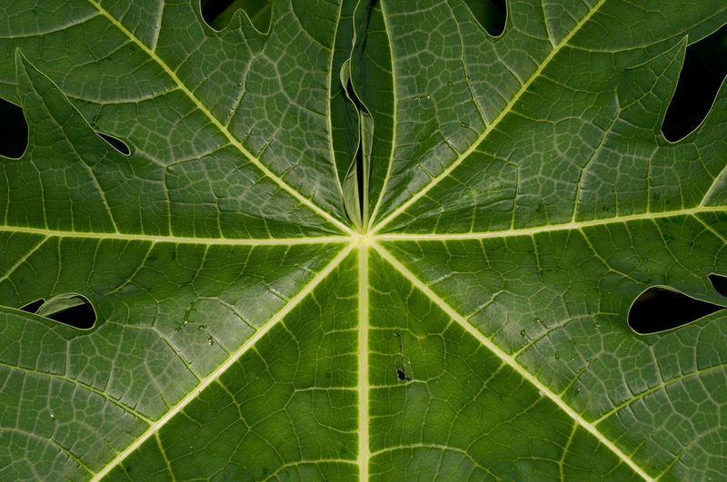Backgrounds Beauty In Nature Close-up Fragility Freshness Green Color Growth Leaf Leaf Vein Nature Pattern Plant Part Textured