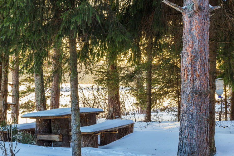 Winter. Resting place by the river. Beauty In Nature Cold Temperature Day Forest Nature No People Outdoors Sky Snow Sunlight Tree Winter