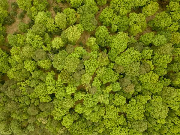 Trees from above new forset Dronephotography Drone  Like4like Follow4follow Green For Sale Forset Tree DJI Mavic Pro Dji EyeEmNewHere EyeEm Nature Lover Nature Canonphotography From Above  Plant Life Leaves Leaf Woods