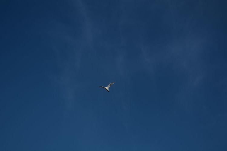 Gaivota Seagull