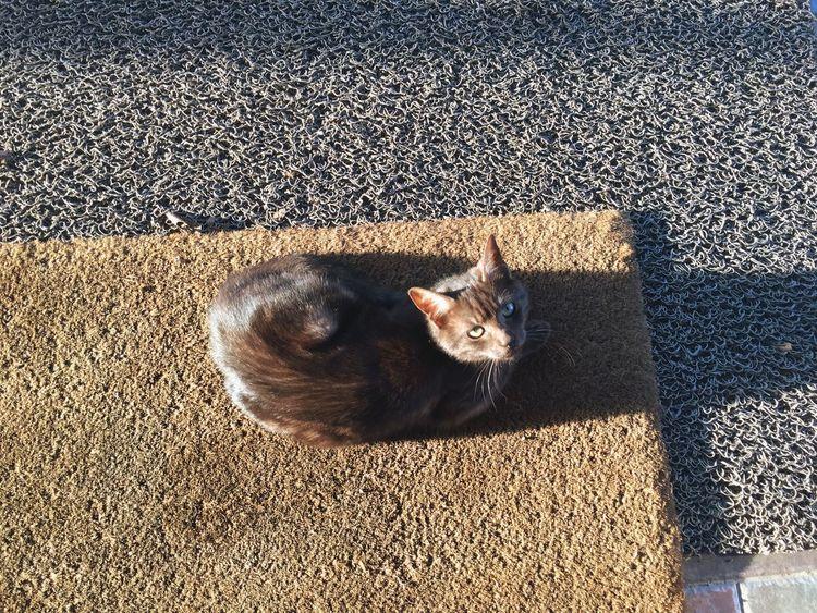 Cat look Cat Cats Cat♡ Cat Lovers Catsofinstagram Catoftheday Catsagram Cats Of EyeEm Caturday Catlovers Kedi Kedicik Kedidir Kedi Kediler Kedi Aşkı Kedim  Kedidirkedi Kedici Kediseverler Kedicik 🐈 Kedilobisi Cat Watching Catstagram Cat Eyes Cats 🐱