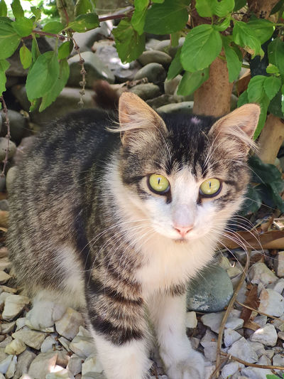 Close-up portrait of tabby cat on plant