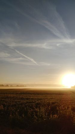 Landscape Agriculture Nature Scenics Field Rural Scene Sky Outdoors Tranquility Sunset No People Beauty In Nature Sunlight Cereal Plant Horizon Cloud - Sky Day Horizon Over Land Close-up Green Color EyeEm Gallery Strassen Und Wege Foggy Morning Eyeem Market Blauer Himmel Und Sonnenschein