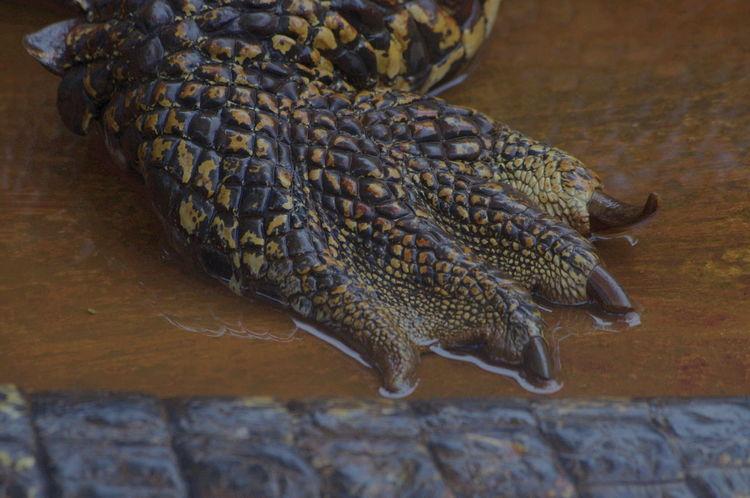 Mini Zoo Bintan Mini Zoo Animal Scale Animal Themes Close-up Crocodile No People One Animal Reptile
