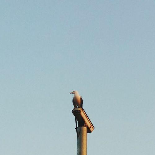 Seagull Cctv Camera