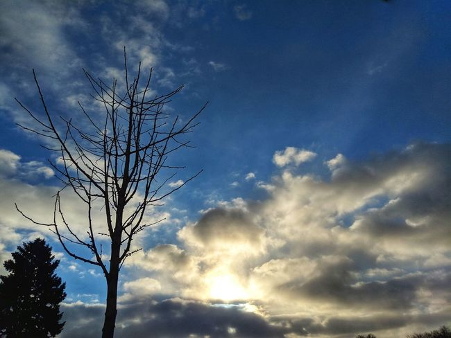 Sunset Tree Blue Sky Cloud - Sky Close-up Moody Sky Dramatic Sky Atmospheric Mood Cloudscape Single Tree Sky Only Branch Treetop Heaven