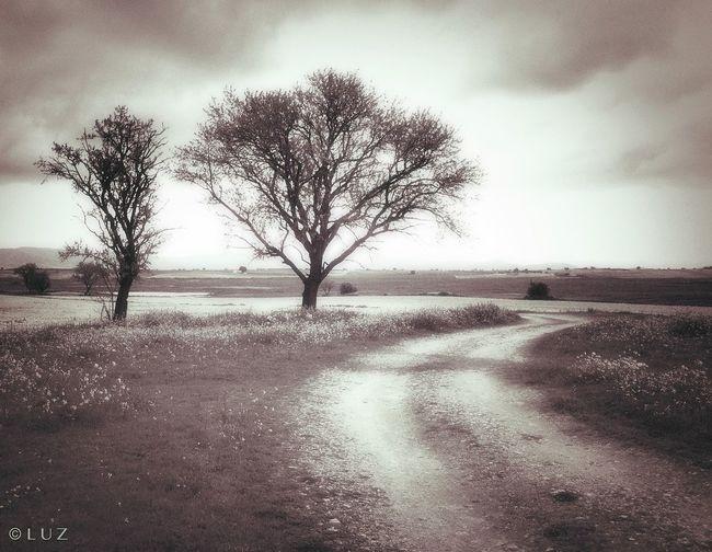 me gustan los caminos. Landscape_Collection Landscape #Nature #photography Blackwhite