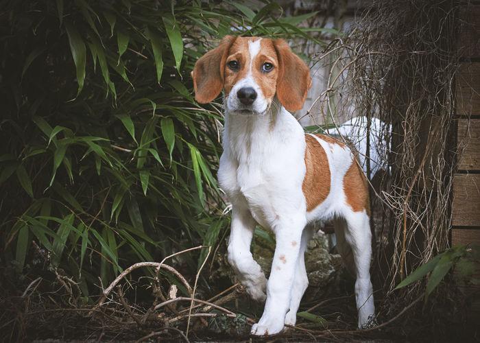 Puppy Duke