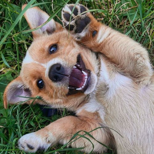 Puppy ☺ Puppy Dog Funny Animal Smile Dogsmile Happy Lifeisgood