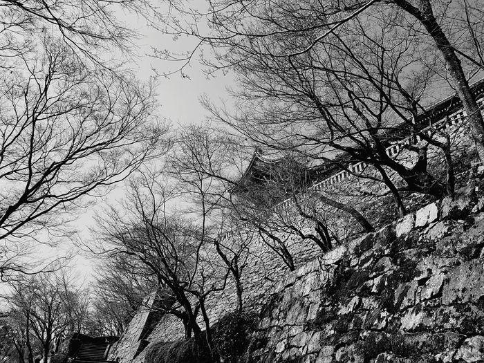 Temple Kyomizudera Pagoda Japanese Garden Garden Abandoned Derelict Nature Garden Winter Japan Bare Trees Temple Mountain Backgrounds Full Frame Textured  Abstract Pattern Close-up Sky