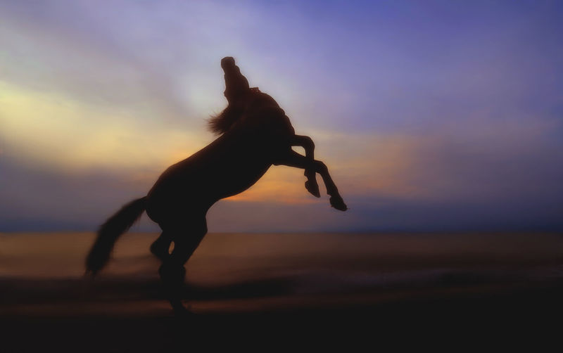 Silhouette horse rearing up at beach against dramatic sky during sunset