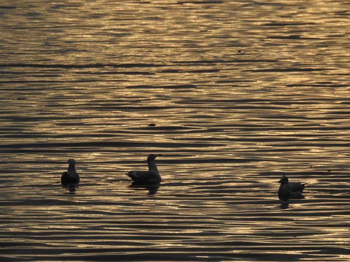 ducks in Oslo.