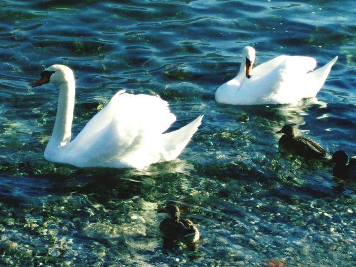 Lake Como Nature