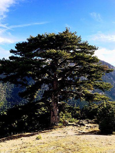 Hug A Tree No Ordinary Beauty Mountain View Walking Around AmazingGreece Mount Zireia