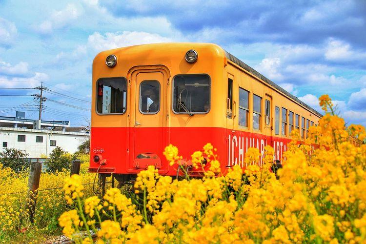 初の小湊鉄道撮りは大興奮でした。あなたとならもっと楽しかっただろうなぁ…。 あなたと見隊 あなたを想う 小湊鉄道 菜の花 似非撮り鉄