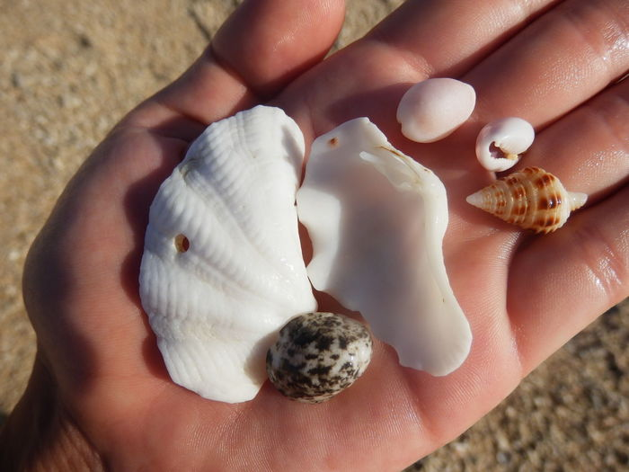 Close-Up Of Hand Holding Shells