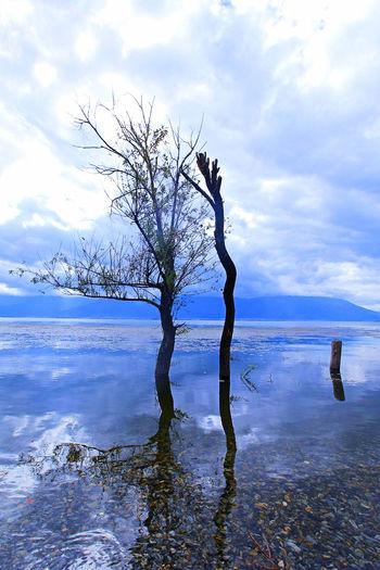 洱海~枯树~
