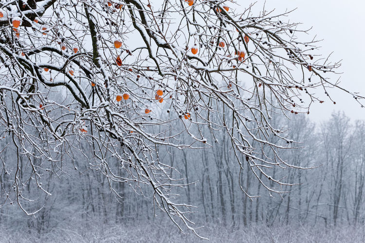 Bare tree against snow covered plants