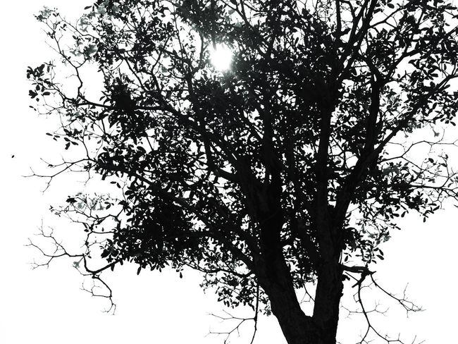 Blackandwhite Photography Clearsky Tree Tree Branches IPhoneography Eyeem Philippines BYOPaper!
