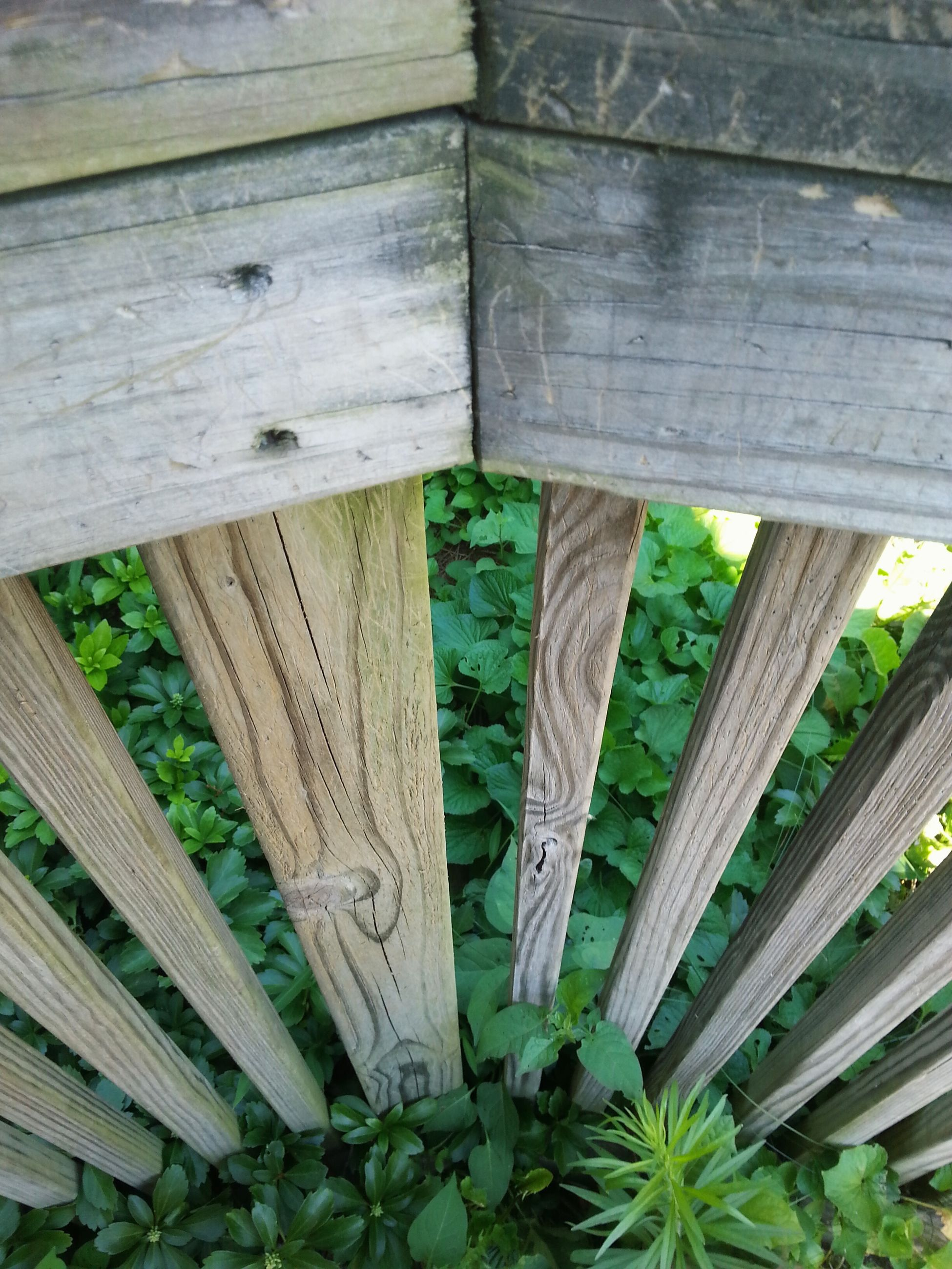 wood - material, wooden, wood, plank, fence, pattern, day, no people, built structure, close-up, growth, outdoors, textured, tree, nature, low angle view, sunlight, protection, old, architecture