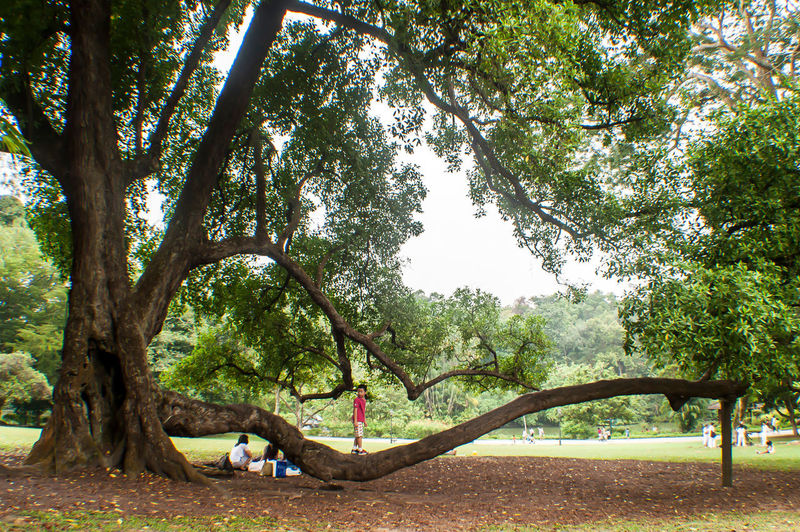 Botanical Garden Heritage Singapore $5 Note Tree Art Preservation And Nature Kids Having Fun Outdoor Park Foliage Plant Tropical Rainforest Branches And Leaves