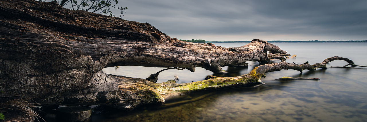 Panoramic view of driftwood on beach against sky