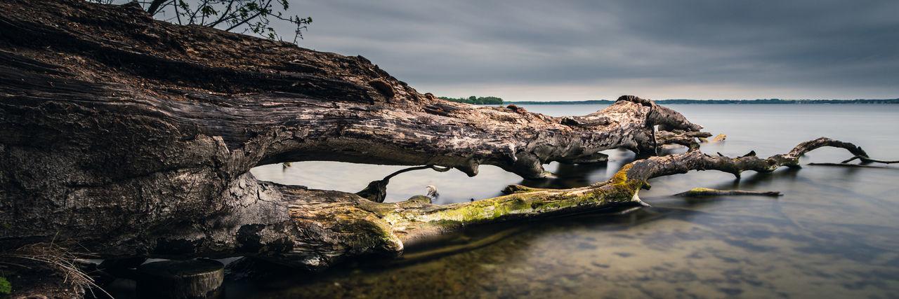 Tree trunk in lake