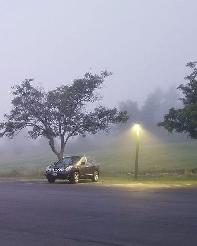 Fog Early