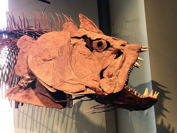 Fossil Monster Animal Bone Animal Skull Prehistoric