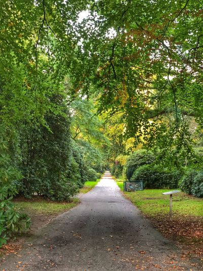Where it ends Plant The Way Forward Tree Direction Green Color Growth Road No People Nature Day Beauty In Nature Footpath Tranquility Outdoors Transportation Sunlight Diminishing Perspective Grass Park Shadow