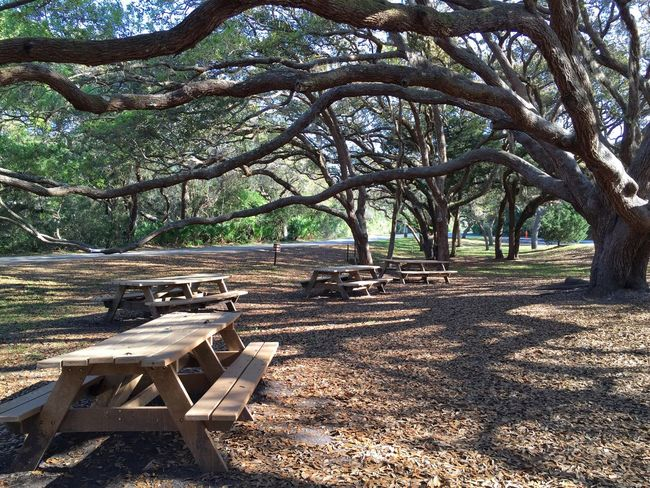 Picnic under the oak trees Matanzas National Monument St Augustine, FL Matanzas Inlet Picnic Tables Picnic Area Nature's Diversities