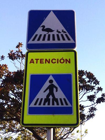 Signs Sign Duck Ducks Duck Walk Pedestrian Walk Oleiros SPAIN A Coruña Cityscapes