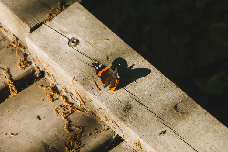 High angle view of butterfly on wood