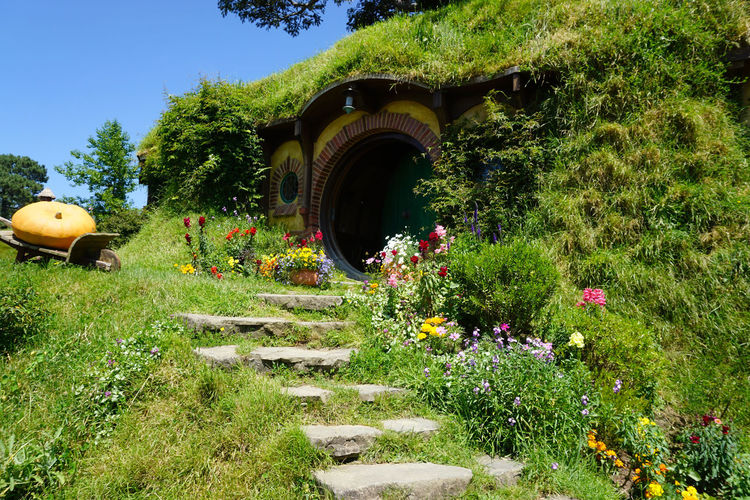 2017 Grass Green Hobbit Beauty In Nature Day Door Flower Garden Grass Green Color Growth House Nature New Zealand Outdoors Plant Tree ニュージーランド ホビット ホビット村 小人