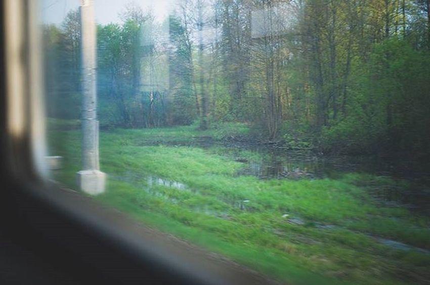 Window Windows Green Greenery Spring Train Travel Travels Lookingouttrainwindows Sunshine Trees Tree Forest Inmove InMotion Colors Color Photography Photo Nikon Nikon_photography_ Water Swamp