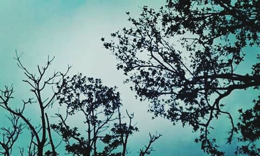 Two Is Better Than One Beauty In Nature Nature_collection Shekelsphotography Naturelovers Nature Photography Nature Fiji ❤🌴 Photography Silhouette Tree Branch Growth Non-urban Scene Remote Solitude No People Outdoors Outline High Section Beauty In Nature Scenics Tranquil Scene Low Angle View
