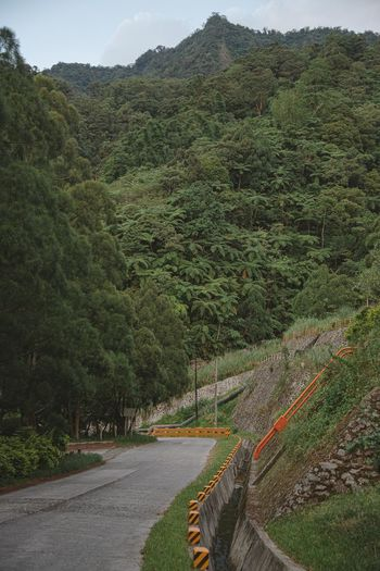 Scenic view of road amidst trees and mountains