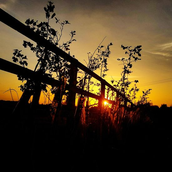 Sunset Silhouette Tree Nature Low Angle View Outdoors Beauty In Nature Sky No People Autumn sunset