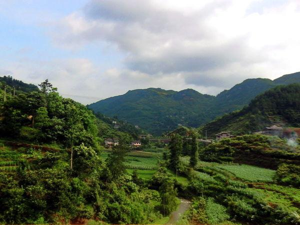 Hi-tea High Altitude Photography In Motion Scenery Scenery Shots Tea Tasting Things I Like Tranquil Scene Tranquility Greenery China,Guizhou Scenics Feel The Journey