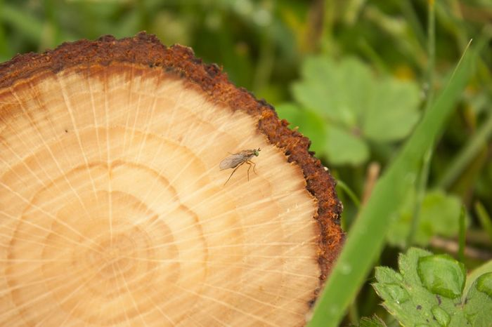 Insect Nature Close-up Plant Tree Ring Tree Trunk Day Tree Stump Beauty In Nature Tree