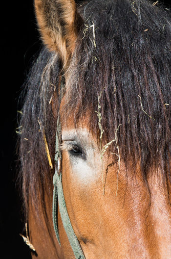 Close-up of Horse in Germany Barn Deutschland Rural Animal Wildlife Brown Fur Brown Hair Close-up Domestic Animals Ear Europe Eye Farm Building Farming Farming Animal Farming Animals Fur Germany Half-timbered Horse Horse Riding Mammal Mammals Stable Stables Window